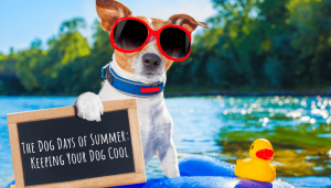 The Dog Days of Summer Keeping Your Dog Cool