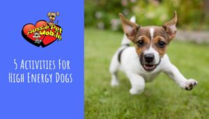 5 Activities For High Energy Dogs-Aug-2021